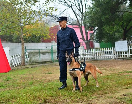宠物犬培训基地