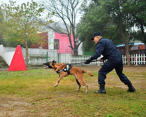 上海犬只训练