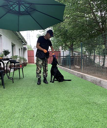 宠物犬培训
