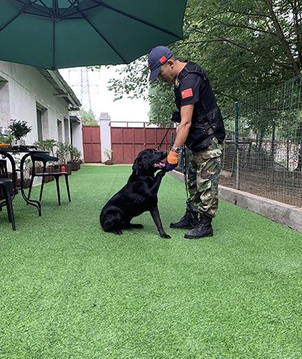 宠物狗培训