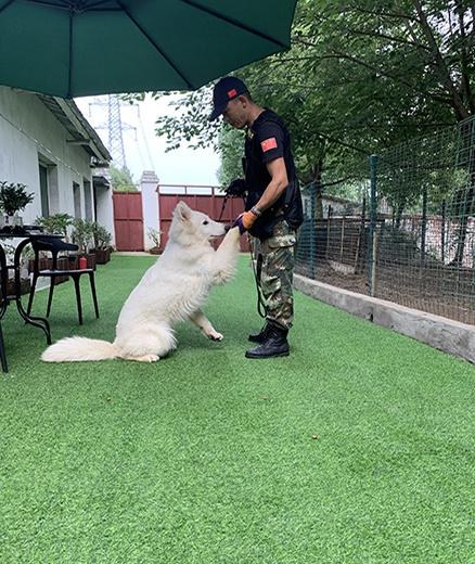 宠物狗培训学校