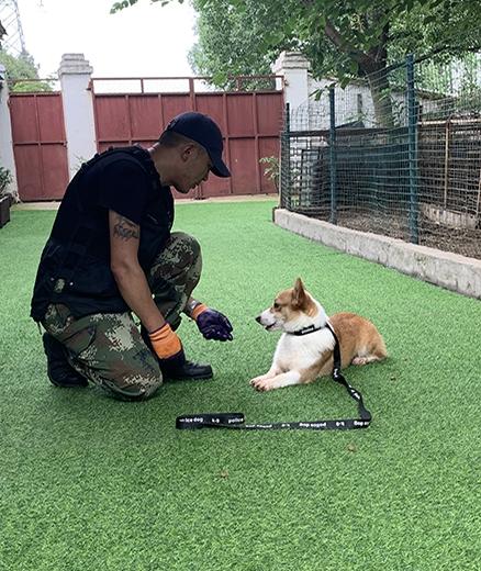 宠物犬寄养基地