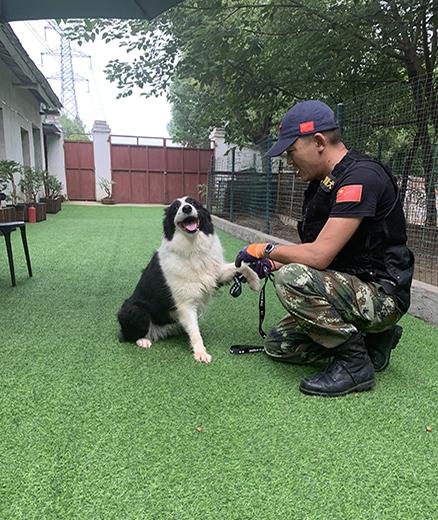 专业训练狗